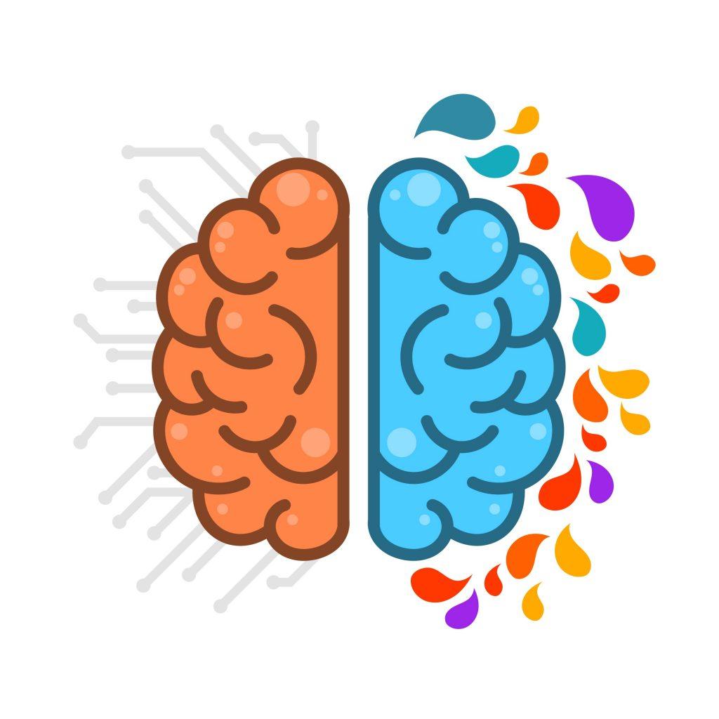 vector cerebro derecho e izquierdo